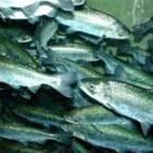 Vis voor dummies - de basis (kiezen, kopen, bereiden)