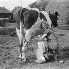 Kosher eten: waarom scheiden van melk en vlees?