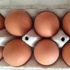 Waar komt mijn ei vandaan?