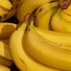 Bananen - Vader Steenwelle maakt kunst van banaan