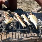 Visluchtjes verwijderen en voorkomen