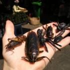 Entomofagie: Insecten op het menu, vroeger en nu