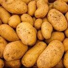 Aardappel, familie van de nachtschade-achtigen