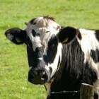 Jodendom en voeding: vegetarisme – vegetarisch eten