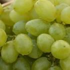 Hoe moet je druiven bewaren en vers houden? Voorkom rotheid!