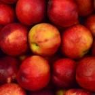 Appelrassen: welke soorten appel zijn er allemaal?