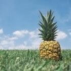 Is deze ananas rijp? Beoordeel in drie stappen een ananas