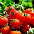 Voedselbronnen putten uit. Tijd voor substifood!