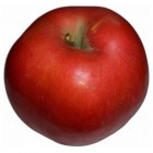 Appelsoorten - Toepassing, kenmerken en verkrijgbaarheid