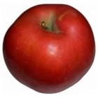 Appelsoorten - Toepassing & Verkrijgbaarheid (+ foto�s)