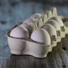 Het uiterlijk van een ei