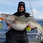 Skrei: wat is skrei en hoe smaakt de vis?