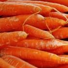 De geneeskrachtige wortel (groente)