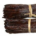 Vanille, een belangrijke specerij