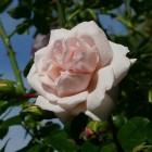 Monchoutaart met rozenjam, framboos en witte chocolade