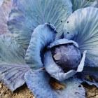 Streel de zintuigen met kleurige en vergeten groenten
