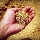 Lekkere rijstrecepten