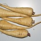 Vergeten groenten: recepten met pastinaak en zoete aardappel