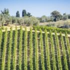 De wijnen van Bergerac