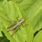 Insecten eten; gezond en duurzaam
