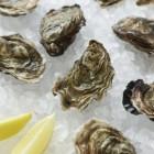 Oester – platte oester en creuse, Japanse oester