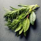 Soorten kruidenthee en hun werking op de gezondheid: tips