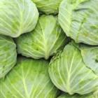 Vergeten groente of Oud-Hollandse groente weer in trek