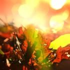 Herfst: recepten met goudgele, honingzoete kweeperen