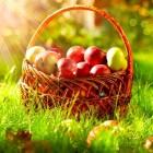 Zelf stoofperen, appelmoes en rabarber maken