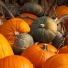 Zoetigheden voor bij de koffie of voor Halloween met pompoen