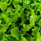 Frisse salades voor het voorjaar